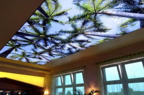 3D натяжной потолок тропики